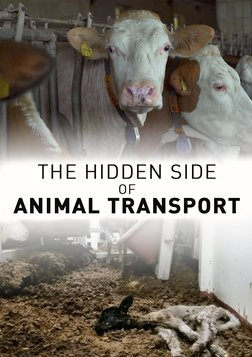 The Hidden Face of Animal Transport - Investigating Animal Transport in Europe
